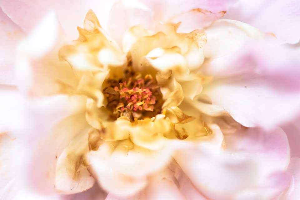 Lucille_Galleli-Floral _2019_-2